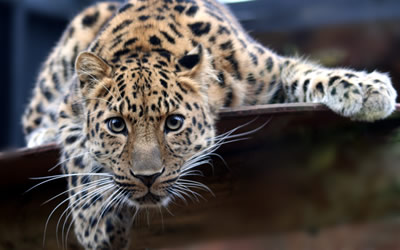 The Land of the Leopard